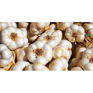GARLIC BULBS Australian White - Boondie Seeds