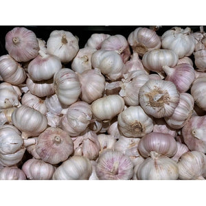 GARLIC BULBS -  Australian Red - Boondie Seeds
