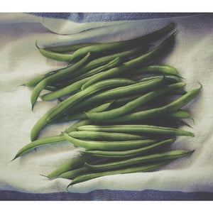 BEAN 'Blue Lake' 25 seeds - Boondie Seeds