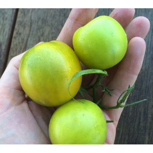TOMATO 'Lime Green Salad' - Boondie Seeds