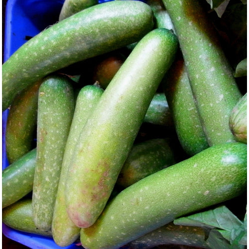HAIRY GOURD / Hairy Melon / Mao Gua / Fuzzy Gourd - Boondie Seeds