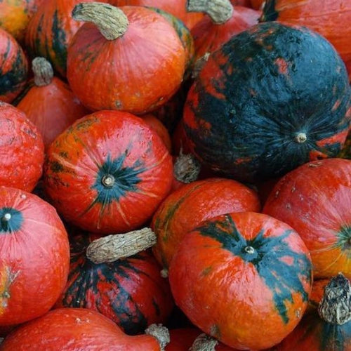 PUMPKIN 'Lakota' - 6 seeds