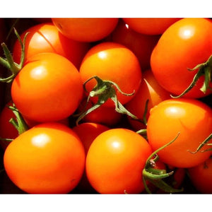 TOMATO 'JUANNE FLAMME' - Boondie Seeds