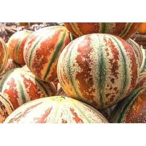 KAJARI MELON / Indian Rockmelon - Boondie Seeds
