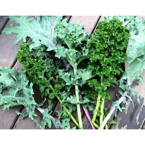 KALE 'Heirloom Mix' - Boondie Seeds