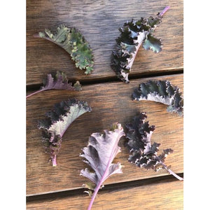 KALE VARIETY PACK - 8 packets - Boondie Seeds