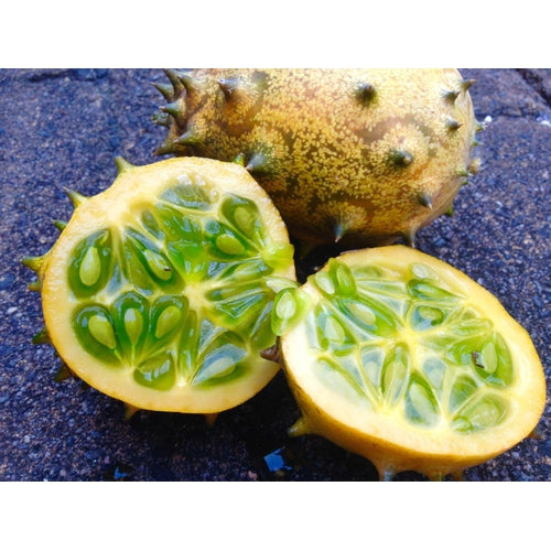 CUCUMBER 'African Horned' / Kiwano / Jelly Melon - Boondie Seeds