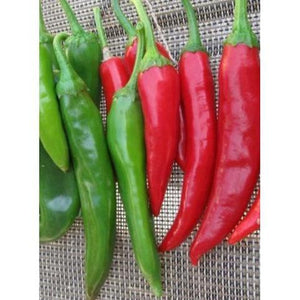 CHILLI 'Korean Hot Pepper' - Boondie Seeds