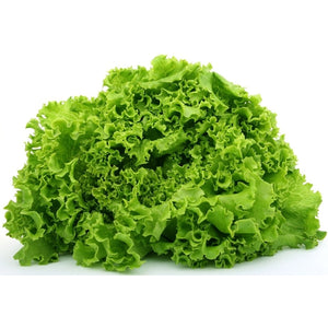 LETTUCE 'Grand Rapids' - Boondie Seeds