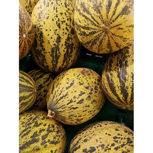ROCKMELON 'Sweet Freckles' - Boondie Seeds