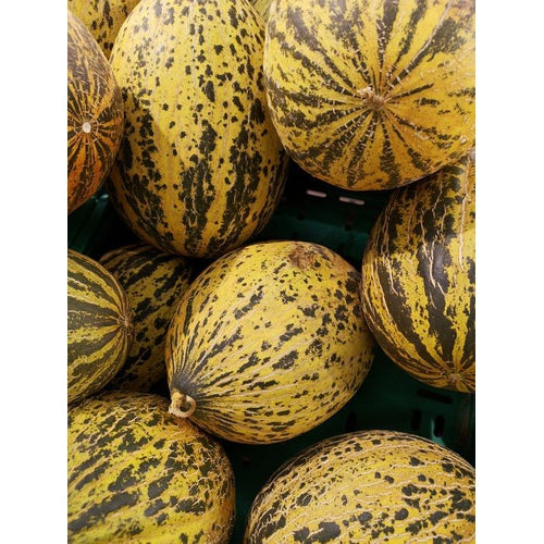 ROCKMELON 'Sweet Freckles'