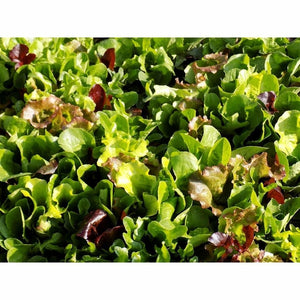 MESCLUN MIX - Summer Blend - Boondie Seeds
