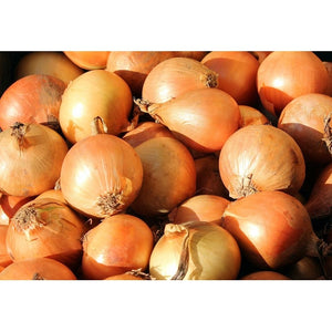 ONION ' Early Pukekohe Long Keeper' - Boondie Seeds