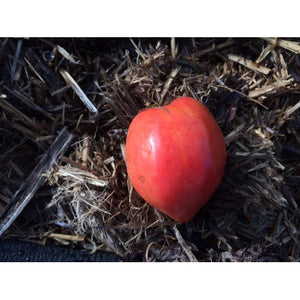 TOMATO 'Oxheart' - Boondie Seeds