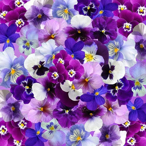 PANSY 'Bambini Mixed' - Boondie Seeds