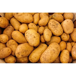 SEED POTATO - Dutch Cream - Boondie Seeds