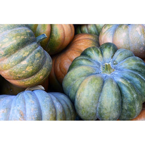 SUPER PUMPKIN COLLECTION 15 PACKETS - Boondie Seeds