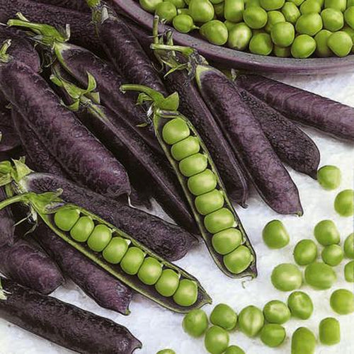 PEA 'Purple Podded' *ORGANIC*
