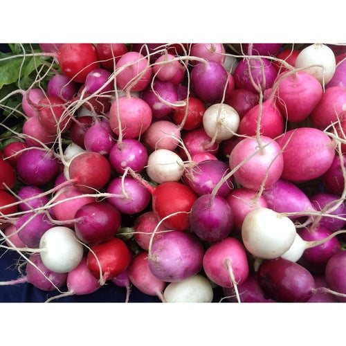 RADISH 'Heirloom Mix'