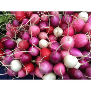 RADISH 'Easter Egg Mix' - Boondie Seeds