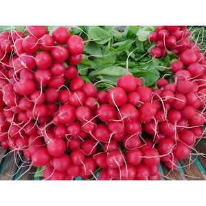 RADISH 'Cherry Belle' - Boondie Seeds