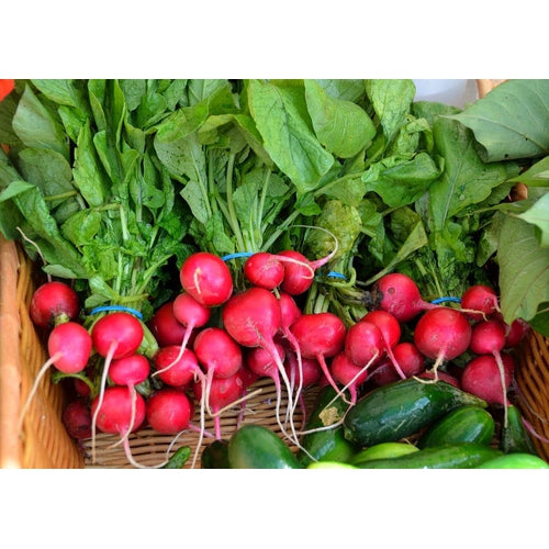 RADISH 'Cherry Belle' seeds