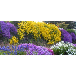 ROCKERY GARDEN PACK / 12 packets - Dwarf Flowers - Boondie Seeds
