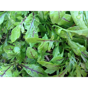 WILD ROCKET 'Dragons Tongue' / Roquette / Rucola / Rugula / Arugula - Boondie Seeds