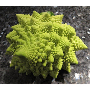 BROCCOLI 'Romanesco' / Romanesque cauliflower / Broccolo - Boondie Seeds