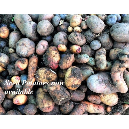 SEED POTATO - Mix