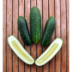 CUCUMBER 'Spacemaster' BUSH - Boondie Seeds