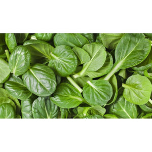 TATSOI Green Leaf - Boondie Seeds