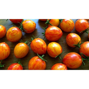 TOMATO 'Orange Sunrise Bumble Bee'