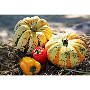 WINTER SQUASH 'Sweet Dumpling' / PUMPKIN - Boondie Seeds