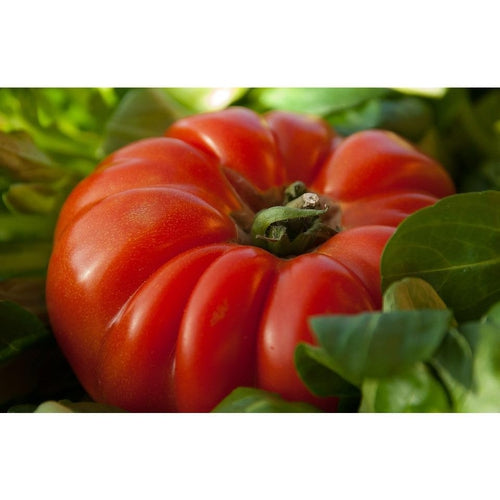 TOMATO 'Rouge De Marmande' - Boondie Seeds
