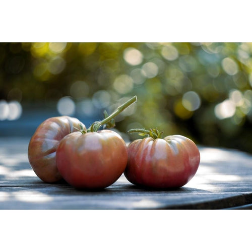 TOMATO 'Purple Cherokee'