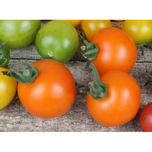 TOMATO 'JUANNE FLAMME'