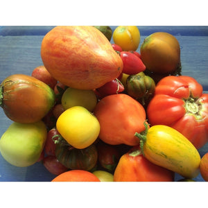 TOMATO 'Heirloom Mix' seeds