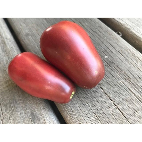 TOMATO 'Purple Russian'