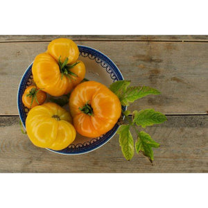 TOMATO 'Mortgage Lifter Yellow'