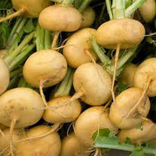 TURNIP 'Goldball' seeds