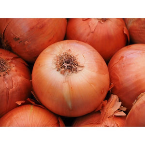 ONION 'GLADALAN BROWN' - Boondie Seeds