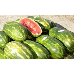 WATERMELON 'Congo' / Giant Watermelon - Boondie Seeds