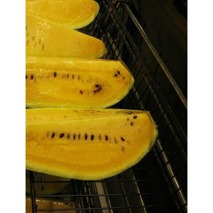 WATERMELON 'Orangeglo' - Boondie Seeds