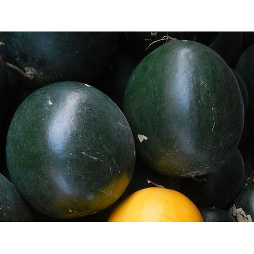 WATERMELON 'Black Tail Mountain' seeds
