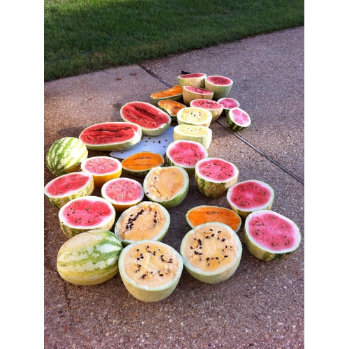 WATERMELON 'Heirloom Mix'