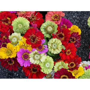 ZINNIA VARIETY PACK - 10 packets - Boondie Seeds