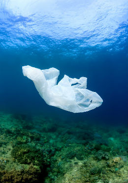 Plastic bags floating on the ocean floor