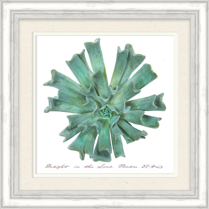 Delight in the Lord Succulent Framed Art