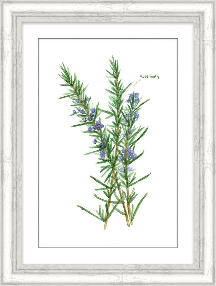 Rosemary Herb Framed Art